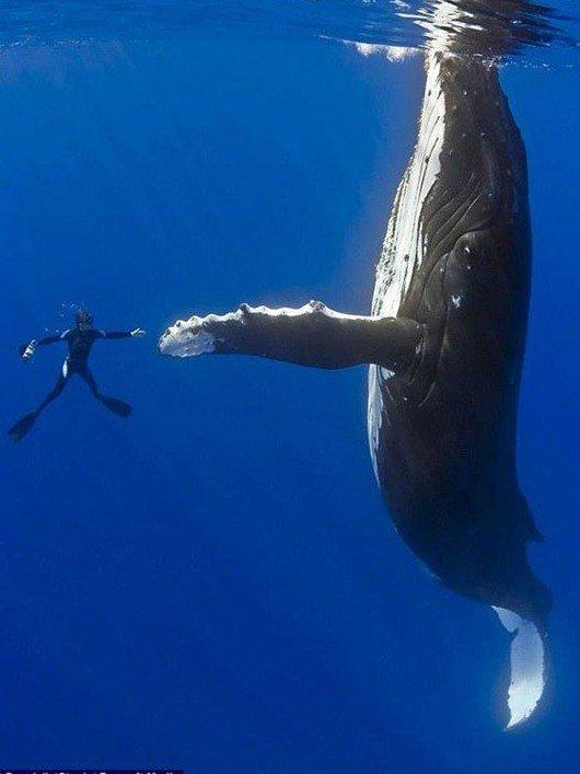 diver whale high five