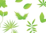 9 Eco Green Leaves Vector