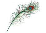 Stylized Peacock Feather Vector Graphic