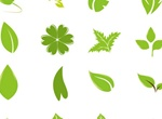 36 Green Leaf Vector Variations Set