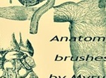 Anatomy Brushes