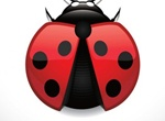 Realistic Red Lady Bug Vector Graphic