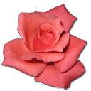 Coral, Rose Icon